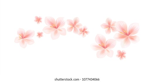Flying light pink peach flowers isolated on white background. Apple-tree flowers. Cherry blossom. Border. Horizontal. Vector EPS 10 cmyk