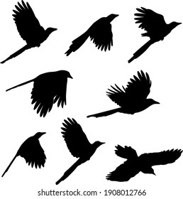 flying magpie silhouettes - vector illustration
