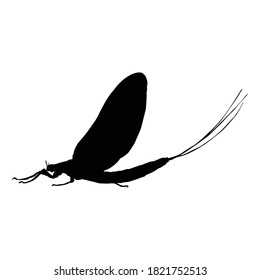 Flying Mayfly (Ephemeroptera) On a Side View Silhouette Found In Map Of All Around The World. Good To Use For Element Print Book, Animal Book