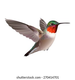 Flying North American Ruby-troathed hummingbird with colorful glossy plumage: distinctive red throat and green reflections on the back. Hand drawn vector illustration on white background.
