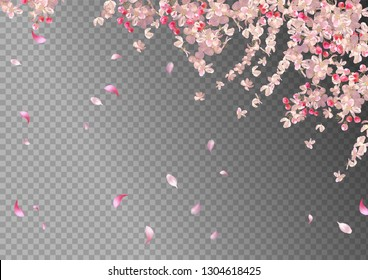 Flying petals on transparent background. Flowers and petals in the wind. Vector spring background with plum or cherry blossom. Hanging flowers