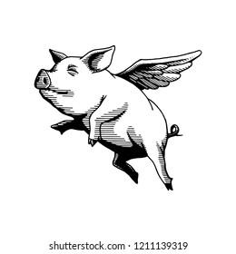 flying pig illustration drawing