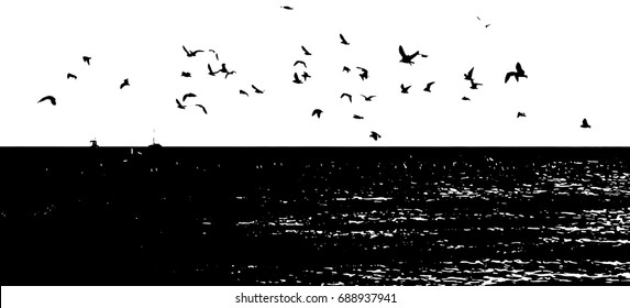 Flying sea gulls vector illustration. Black and white silhouettes.