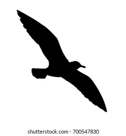 Flying seagull silhouette. Vector illustration in monochrome style on white background. Element for your design. Bird black shape. European Herring Gull.
