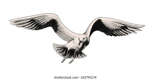 Flying seagull. Vector engraving illustration.