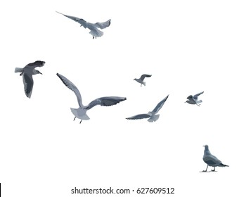 flying Seagulls vector illustration