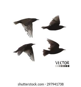 flying starling set. Vector
