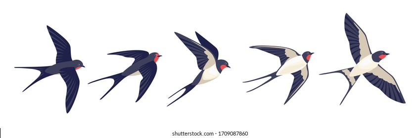 Flying swallows. Bird in flight isolated on a white background. Vector illustration in a flat style.