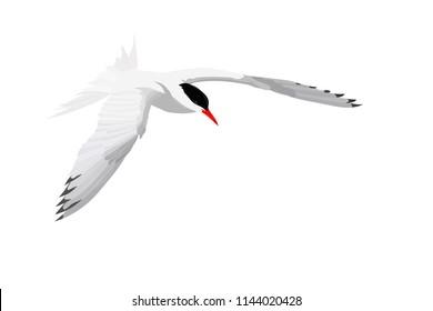 Flying white bird. Common Tern. Sterna hirundo. Vector image.