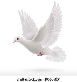Flying white dove on white background as symbol of peace