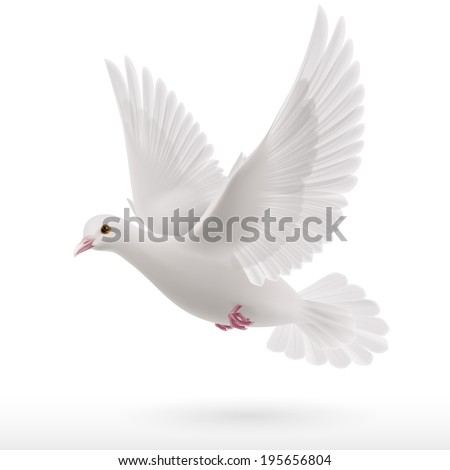 Flying White Dove On White Background Stock Vector Royalty Free