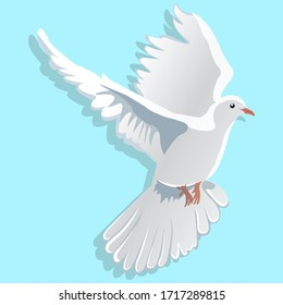 Flying white dove with shadow Isolated on a blue background. Peace dove icon. Vector illustration eps 10.