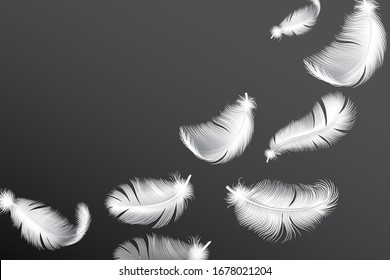 Flying white feathers. Falling realistic bird or angel wings feather flow vector background.