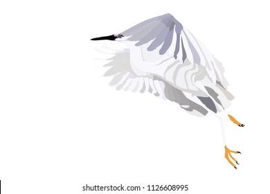 Flying white heron. Vector image.