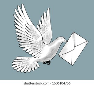 Flying white post pigeon with a letter in an envelope in its beak. Vintage engraving stylized drawing. Vector illustration