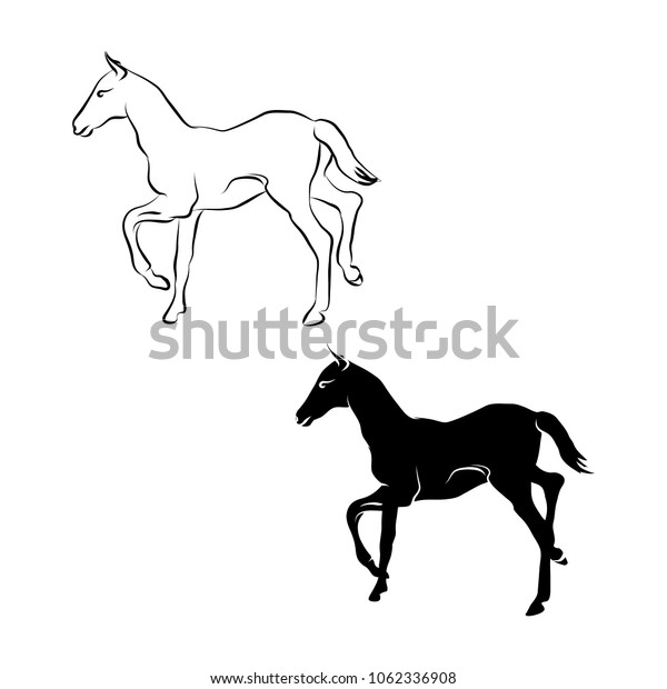 foal outline and silhouette on white background, vector illustration