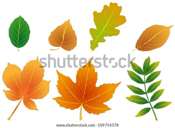 foliage-600w-109754378.jpg