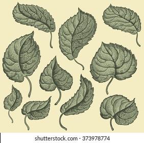 Foliage. Design set. Hand drawn engraving. Vector vintage illustration. Isolated on color background. 8 EPS