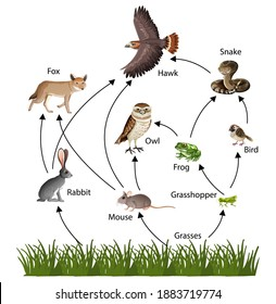Food Chain concept diagram illustration