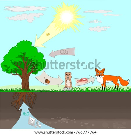 Food Chain Diagram Stock Vector Royalty Free 766977964 Shutterstock