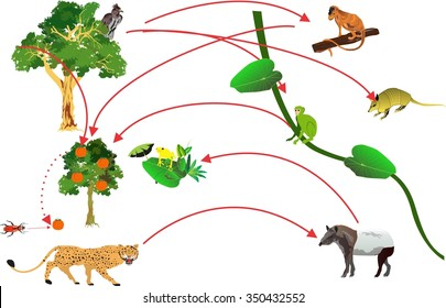 Monkey Life Cycle Images, Stock Photos & Vectors | Shutterstock