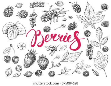 Food hand drawn vector elements. Berries. Vitamins. Vintage illustration. Engraving.  Sketch.