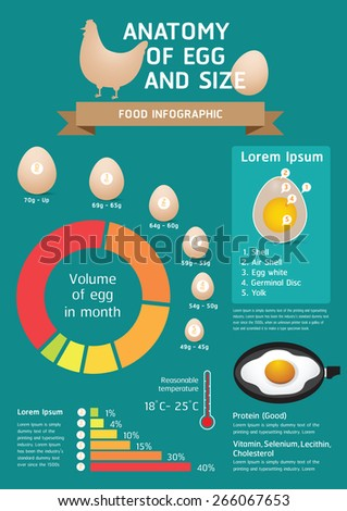 Food Infographic Anatomy Egg Size Stock Vector Royalty Free