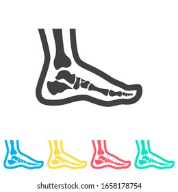 Foot anatomy. Single flat multi color icon set. Simple glyph, flat vector of medical icons for ui and ux, website or mobile application