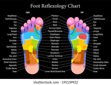 Foot reflexology chart with accurate description of the corresponding internal organs and body parts. Vector illustration on black background.