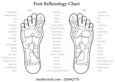 Foot reflexology images stock photos vectors shutterstock foot reflexology chart with accurate description of the corresponding internal organs and body parts outline ccuart Image collections