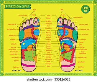 Foot  reflexology chart with accurate description of the corresponding internal and body parts. Vector illustration over white background, isolated.