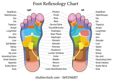 The feet the internal organs images stock photos vectors foot reflexology chart with accurate description of the corresponding internal organs and body parts isolated ccuart Image collections