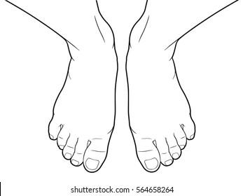 Foot vector, Top view