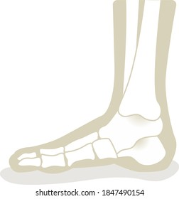 Foot with x-ray bones and podiatry profession icon flat style