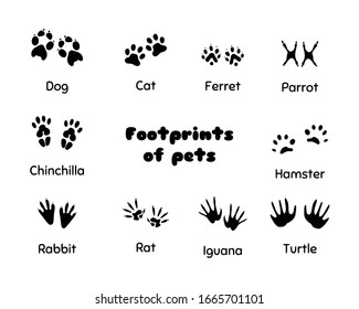 Footprints of animals. Animal legs silhouette, wolf footprint and prints of pets silhouettes. Wild african animals walking paw tracks or track trail. Vector illustration