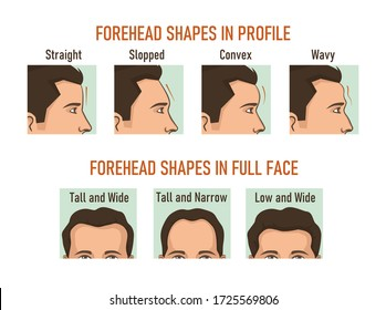 Forehead shapes in profile and full face