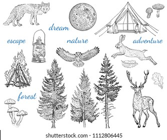 Forest adventure collection: glamping tent, bonfire, camping lamp, full moon, spruce, fir tree, mushrooms, fox, hare, deer, owl. Hand drawn vintage engraving style vector illustration.