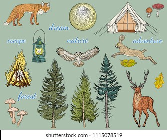 Forest adventure: glamping tent, bonfire, camping lamp, full moon, spruce, fir tree, mushrooms, fox, hare, deer, owl. Hand drawn vector illustration. Khaki, green, beige, brown, yellow, orange colors.