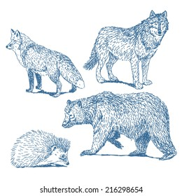 Forest animals drawings set isolated on white background: fox, wolf, hedgehog, bear