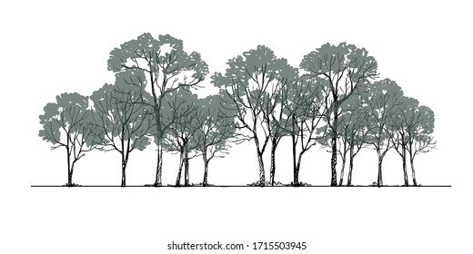 Forest background Sketch ing Vector ,Tree Drawing side view