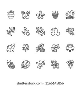 Forest berries flat line icons - blueberry, cranberry, raspberry, strawberry, cherry, rowan berry, blackberry. Watermelon, grapes, olives illustrations for natiral food store