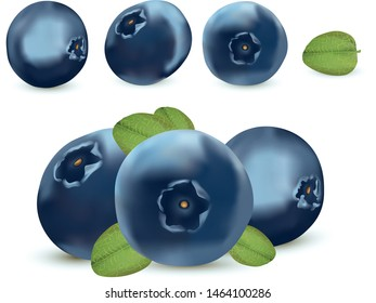 Forest berry. 3d realistic blueberry on white background. Icons blueberry close up. Vector illustration.