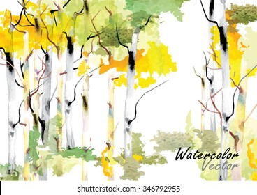 forest birch trees  vector watercolor brush hand drawn ,vector illustration