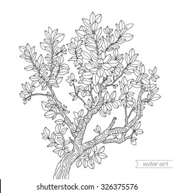 Forest boxwood tree branch with leaves. Vector. Hand drawn artwork. Zentangle. Bohemia concept for invitations, cards, tickets, branding, logo, label. Coloring book page for adults. Black and white