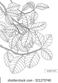 Forest exotic jungle plant ficus tree, bush, branch with leaves. Vector. Hand drawn artwork. Bohemia concept for branding, logo, label. Coloring book page for adult. Black and white