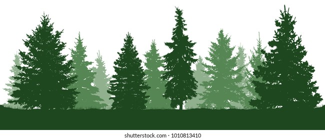 Forest fir trees silhouette. Coniferous green spruce. Vector on white background