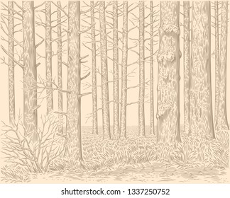 Forest. Hand drawn engraving. Editable vector vintage illustration. Isolated on light background. 8 EPS
