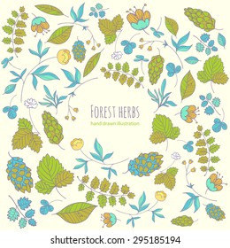 forest herbs. vector background