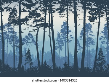 Forest landscape background. Trees pines at dawn. Nature.  Tourism and travelling. Coniferous forest, vector silhouette