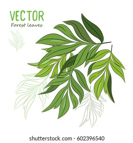 Forest leaves, isolated on white, vector illustration eps-10